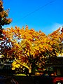Fall in madison - panoramio (1).jpg