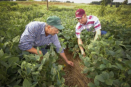 Rockingham County is Virginia's leading county in agriculture. Farmers in Rockingham County, Virginia.jpg