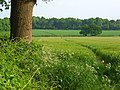 Farmland, Basildon - geograph.org.uk - 814138.jpg
