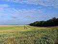 Farmland, Brightwell Baldwin - geograph.org.uk - 1589644.jpg