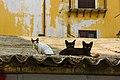 Feral kittens in Palermo-1.jpg