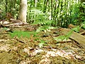 Fern Forest Winterbach.jpg