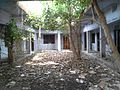 Ficus Plant Grow in Stub Building in Rajbiraj, Nepal.jpg