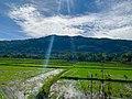 Fields of Southern Sri Lanka.jpg