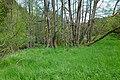 Fischbach 01 28.05.19.jpg