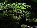 Fischersteig z01.jpg