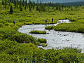 Fishing an Alaska creek.jpg