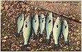 Fishing is always good in the Ozarks (80266).jpg
