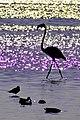 Flamingos-0022.jpg