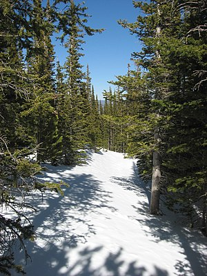 Flattop Mountain Trail - Along the trail at nearly 11,000 feet