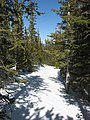 Flattop Mountain Trail in winter.jpg
