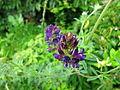 Fleurs violettes sur fond vert.jpg