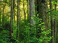 Flickr - Nicholas T - Henry's Woods (Revisited) (4).jpg