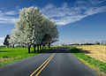 Flickr - Nicholas T - Rural Route.jpg