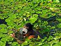 Flickr - archer10 (Dennis) - Guatemala-1777.jpg