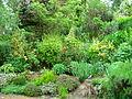 Flickr - brewbooks - Our Garden (26).jpg