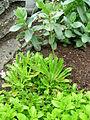 Flickr - brewbooks - Our Garden - May, 2008 (14).jpg