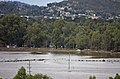 Flood waters on the Murrumbidgee flood plains in North Wagga, viewed from Franklin Drive in Estella (1).jpg