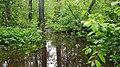 Flooded Swamp.jpg