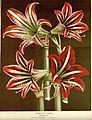 Flore des serres v16 013a.jpg