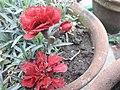 Flower 091810.jpg