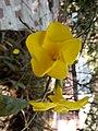 Flower 28 HDR.jpg