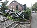 Flower Dortmund 26.jpg