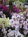 Flower Market Road IMG 5520.JPG