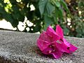 Flower and stone ground.jpg