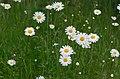 Flowers (9058201713).jpg