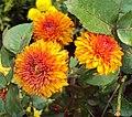 Flowers - Uncategorised Garden plants 280.JPG