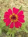 Flowers 81.jpg