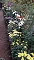 Flowers Shantiniketan.jpg