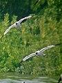 Flying (5442903307).jpg