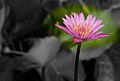 Focus (FLORA-PLANTS) I (660907593).jpg