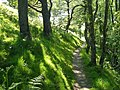 Footpath above Myrtleberry Cleave - geograph.org.uk - 1307176.jpg