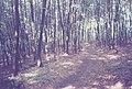 Footpath between the Uni and Setzen (50785653141).jpg