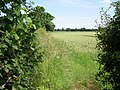 Footpath near Sopworth - geograph.org.uk - 1382617.jpg