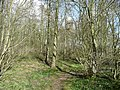 Footpath through the woods - geograph.org.uk - 723637.jpg