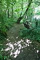 Forest @ Pantin (34378022714).jpg