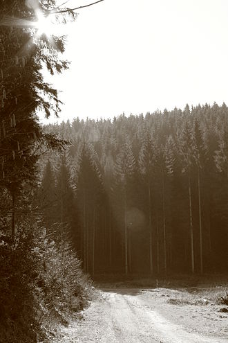 Gaume - Image: Forest in Gaume