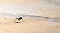 Formigas, elas andam por ai... (4528507446).jpg