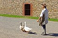 Fortress Lousbourg DSC02374 - The Duck Walk.... (8176441830).jpg