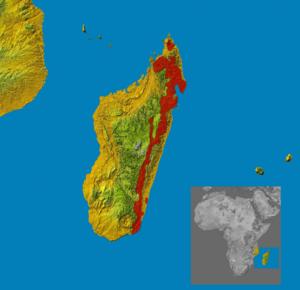 Malagasy civet - Image: Fossa fossana range