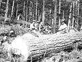 Four men posed with large logs, Snohomish County, ca 1913 (PICKETT 239).jpeg