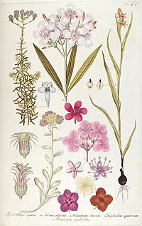 Fragmenta botanica, figuris coloratis illustrata (T. 3) (7943665760).jpg