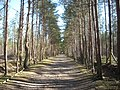 Frensham Common, footpath towards Devil's Jumps.jpg
