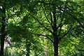 Friedhof Schöneberg Park.JPG
