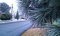 Frost kissed scenery as seen from a Summitview Avenue bus stop, Yakima, Washinton - panoramio.jpg