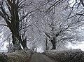 Frosty morning - geograph.org.uk - 1156487.jpg